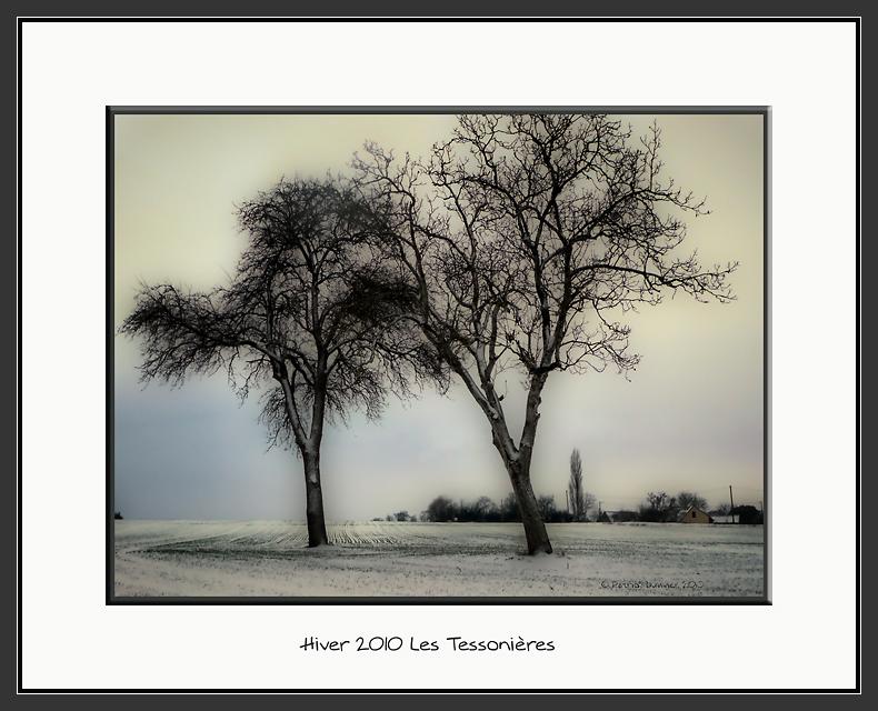 deux arbres en plaine