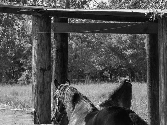 Deux chevaux dans le box