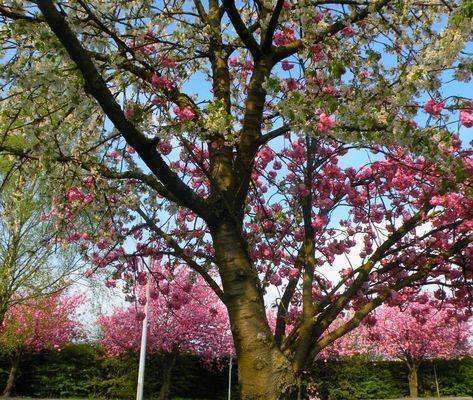 Deux fleurs, un arbre