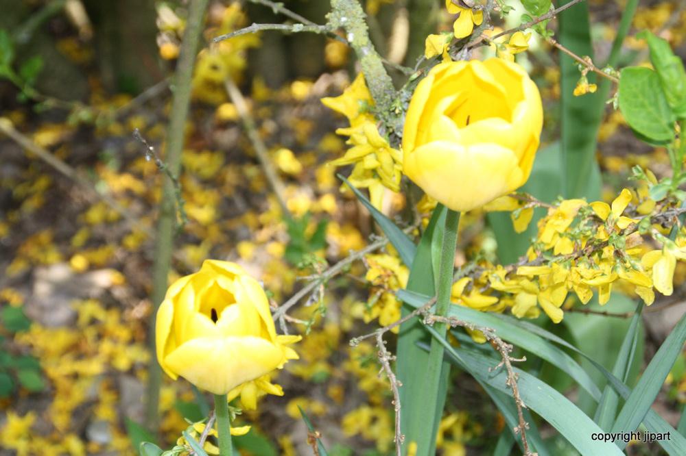 Deux jaunes