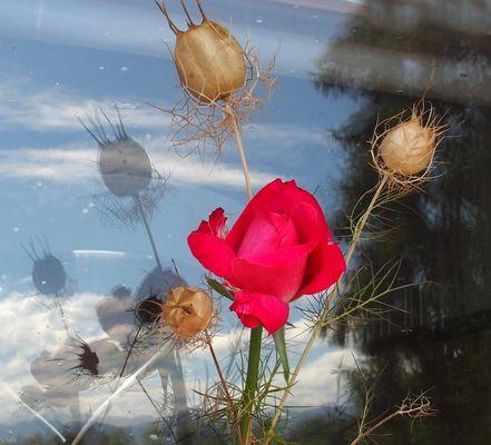 deux petites fleurs de mon jardin....