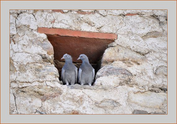 Deux pigeons s'aimaient.....