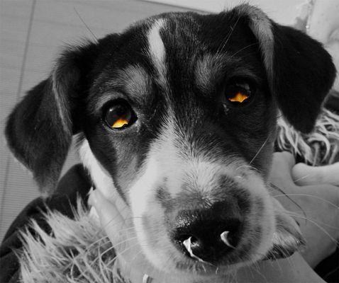 -=Devil Puppy=-