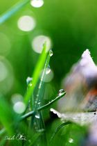 Dewdrops II