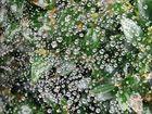 dewdrups in a spiderweb