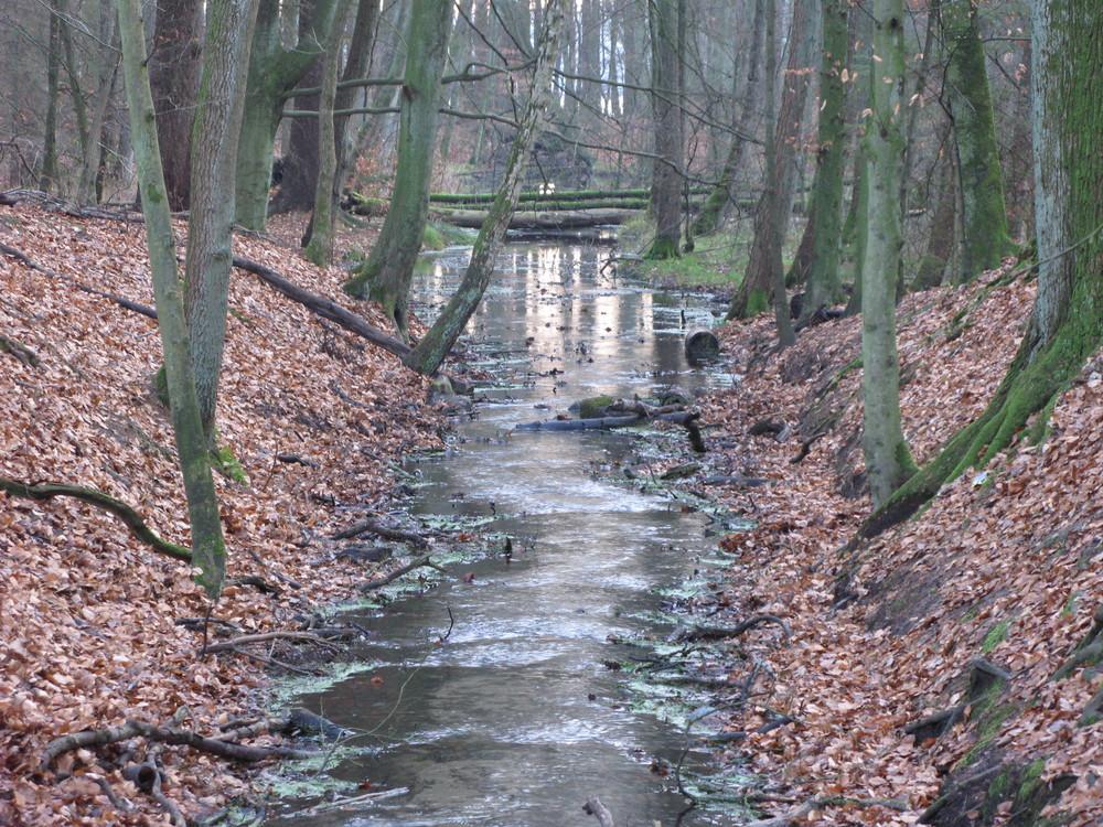Dezember 2008