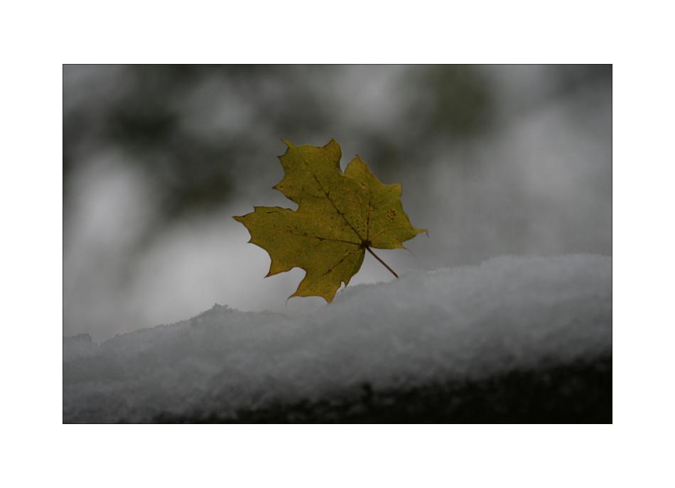 Dezembergrauingraumöchtegernfarbklecks