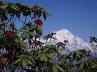 Dhaulagiri / West-Nepal 2009 (Deorali-Pass bis Ghorapani)