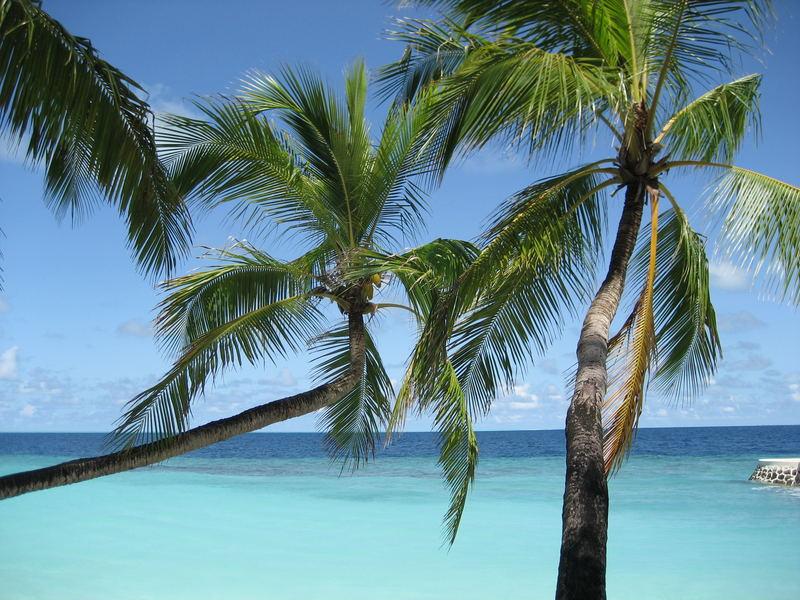 Dhiggiri Malediven Palmen