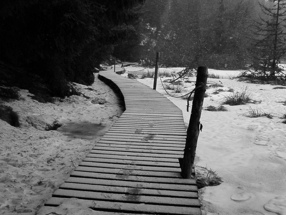 D'hiver traces