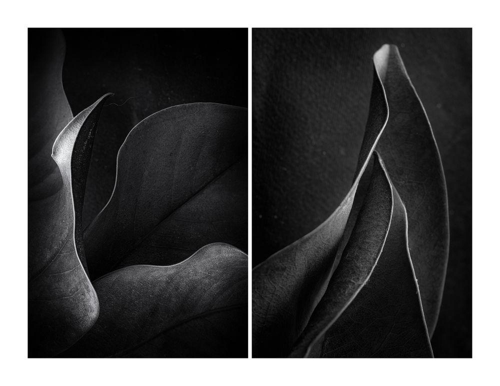 di foglie -1