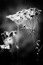 Di luce e di flora