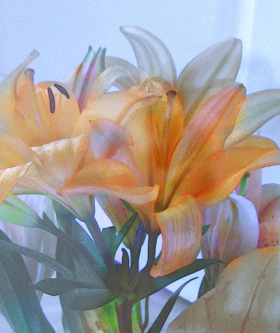 Día de la Madre (Lilium 2)