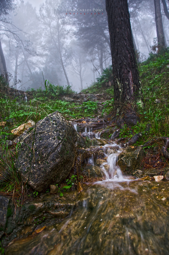 Día de lluvia II