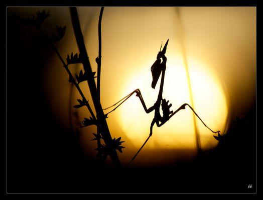 Diablotin au coucher du soleil