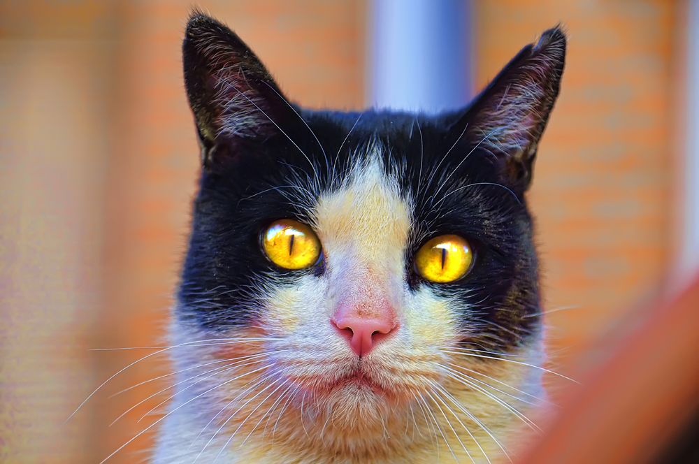 Diafragma cerrado ( el del gato)