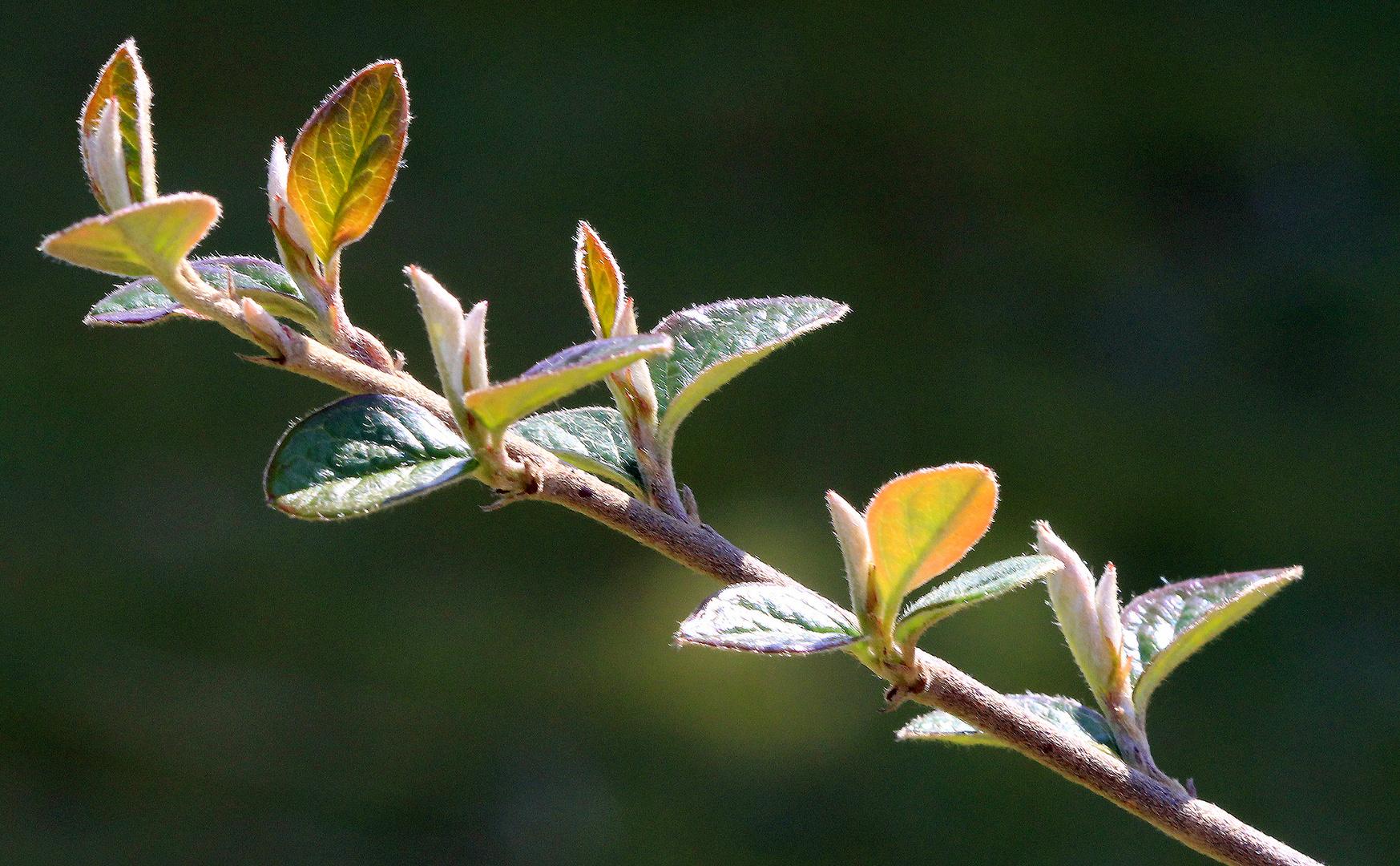Diagonales Wachstum im Frühjahr...