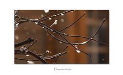 Diamtenbaum
