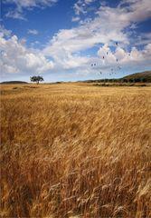 Días de trigo y cielo