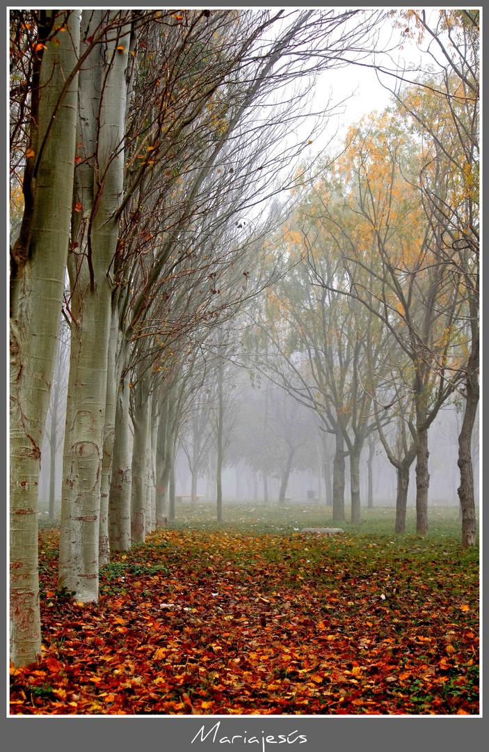 Días grises de invierno