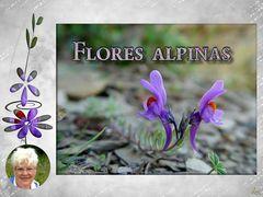 Diashow - Alpenblumen, von Luci