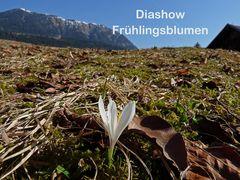 Diashow - Frühlingsblumen + Blüten