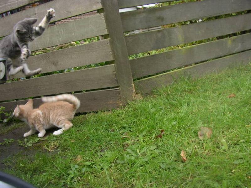 Dich krieg ich! ...wilde Kätzchen spielen