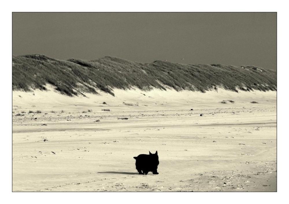 Dicke kleine schwarze Wurst allein am Strand...
