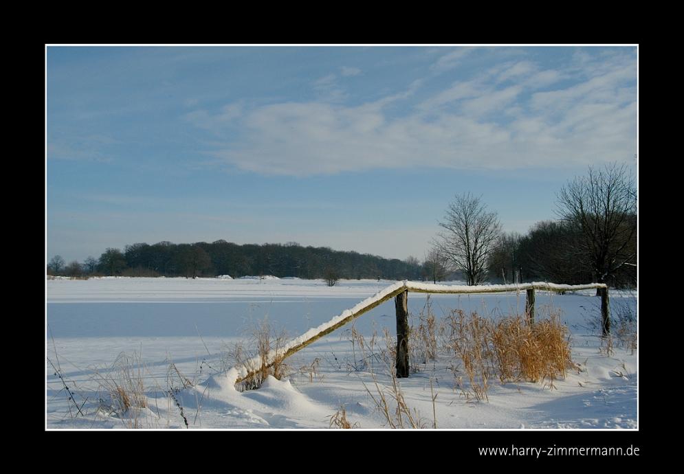 Dicken Böken im Winter