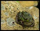 Dicker Frosch oder doch ein verwunschener dicker Prinz ???