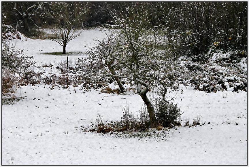die 1. Schneedecke .....