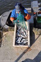 Die 10 Gebote des Fisch essens