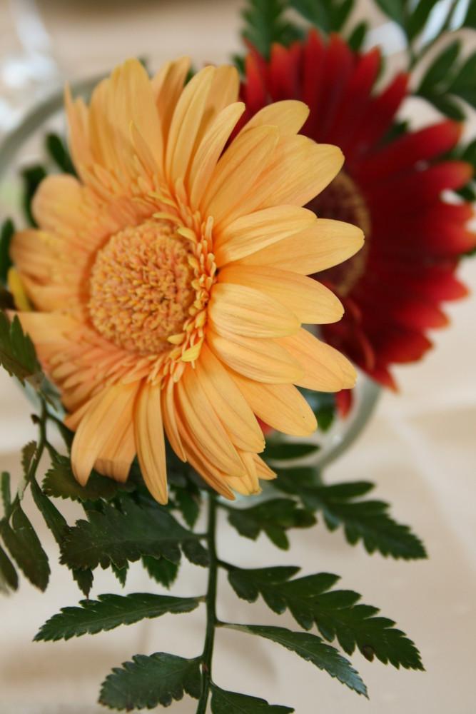 Die 2 Blumen