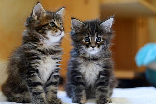 Die 2 kleinen Mäuse Humphrey Hunter & Holly go lightly :))))))