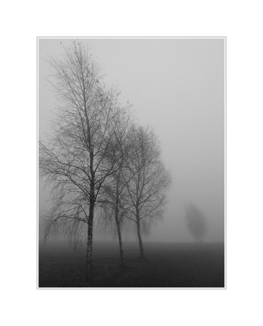 """Die """"3"""" im Nebel"""