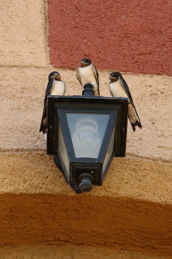 Die 3 von der Lampe