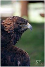 Die Adleraugen....