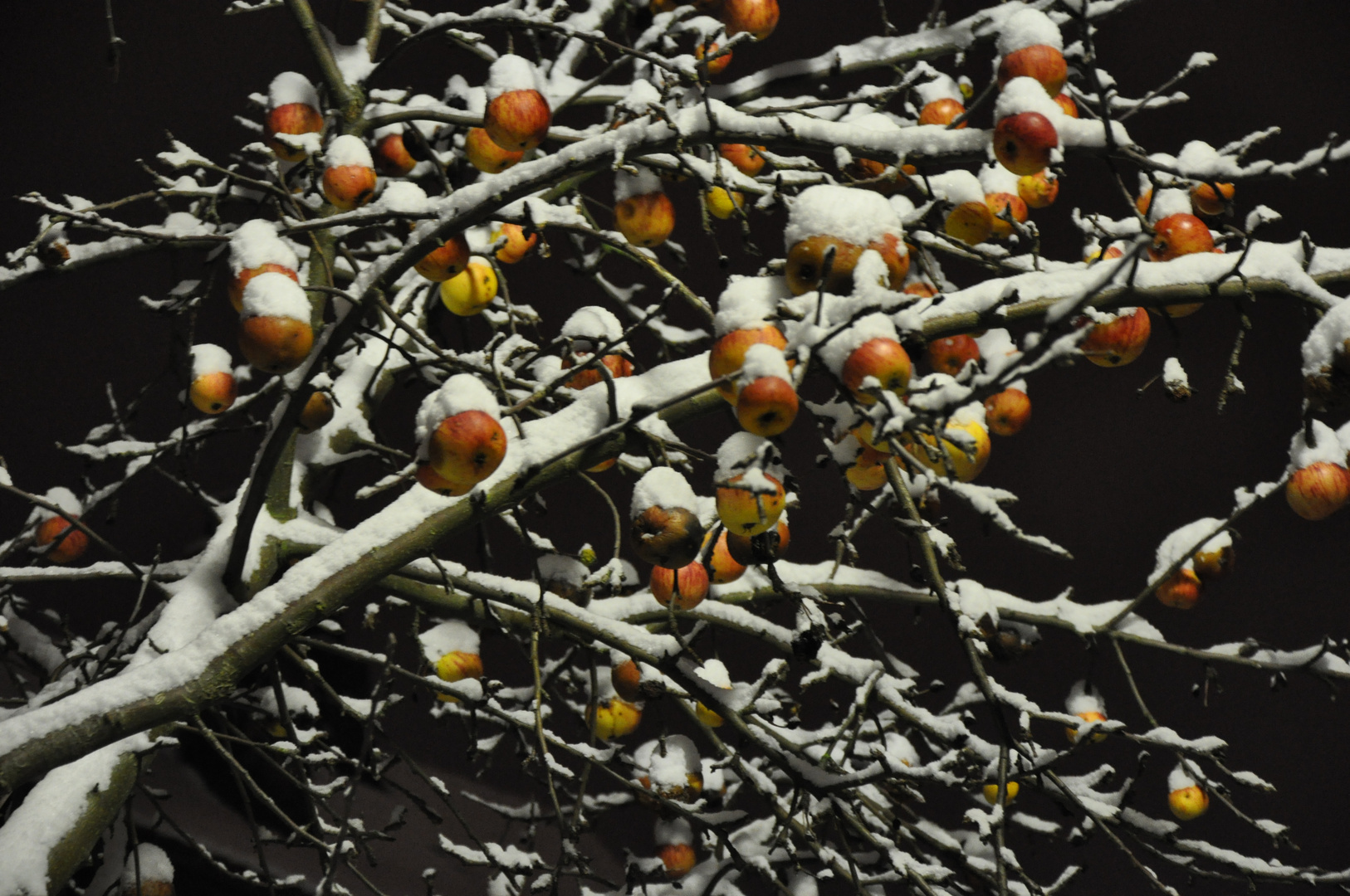 Die Äpfel im Winter
