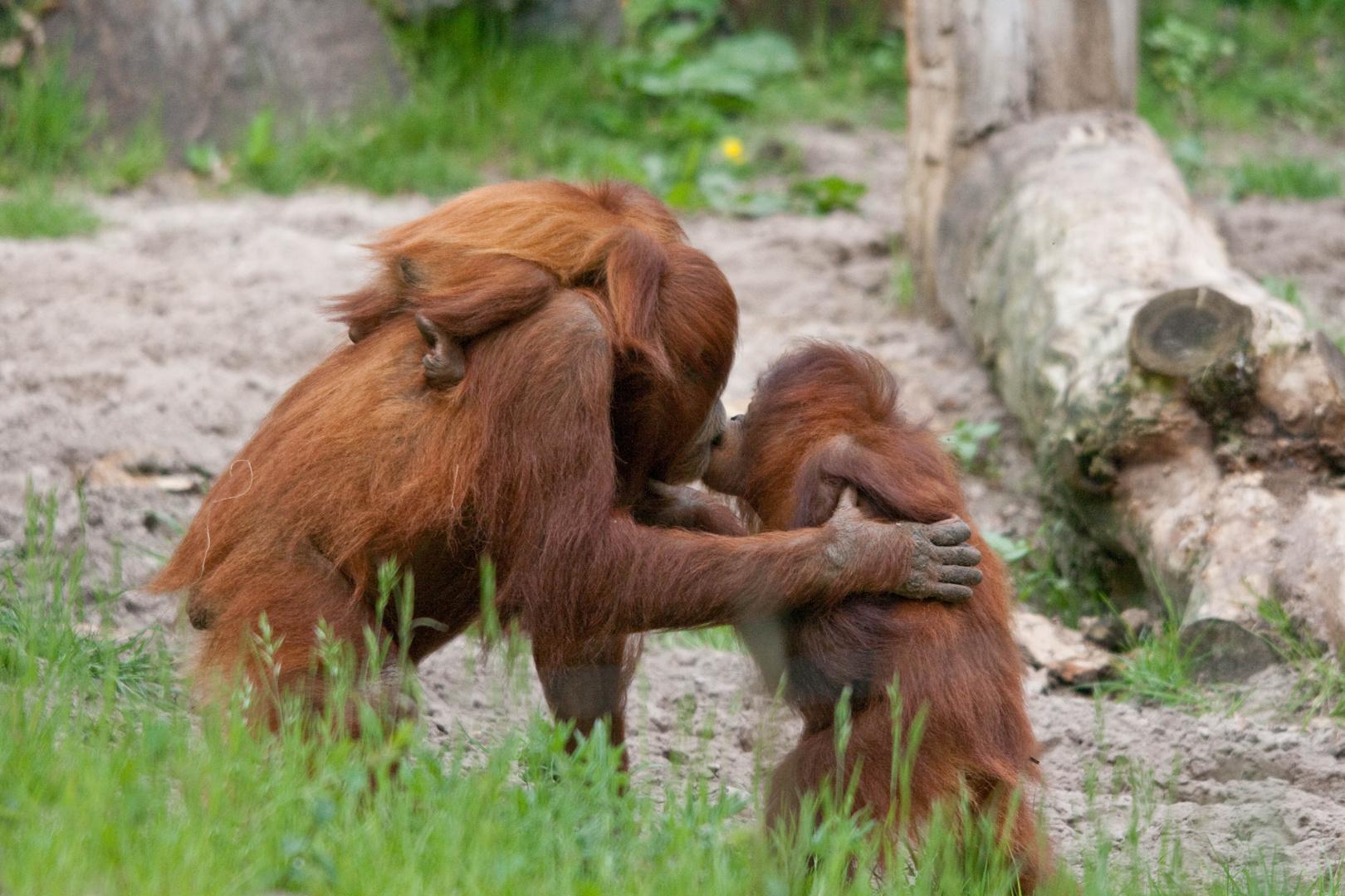 Die Affenmutter liebt ihr Kind..
