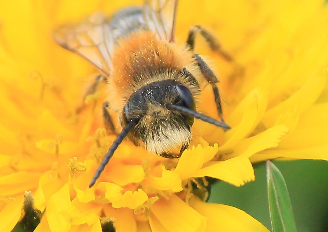 Die Albert Einstein Biene
