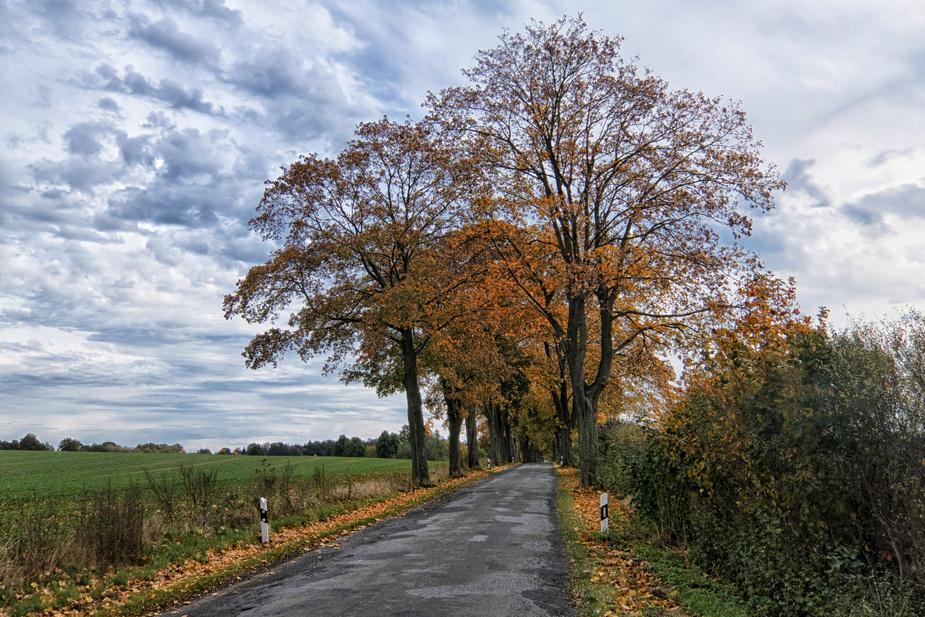 Die Allee im Herbst