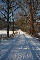 Die Allee im Schnee
