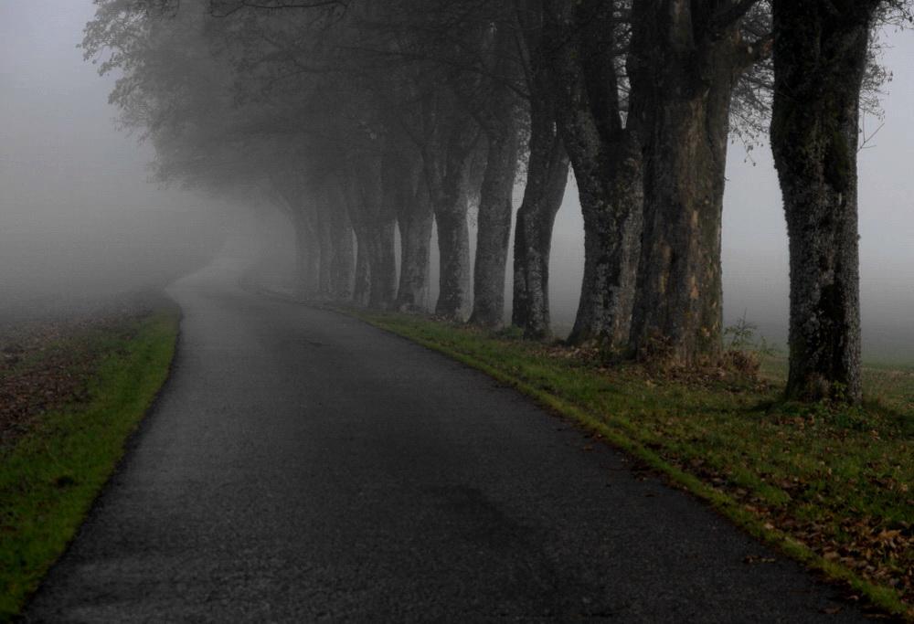 Die Allee zum Fohlenhof im Nebel