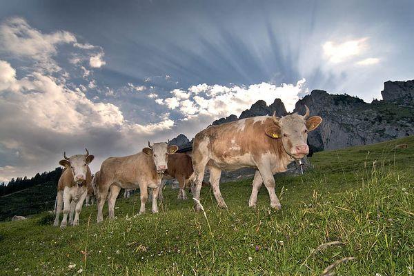 Die Alp