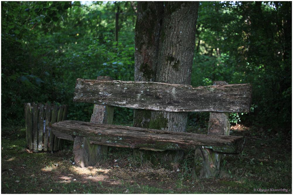 Die alte Bank im Wald