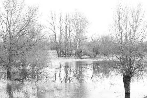 Die Alte Oder im Februar 2008