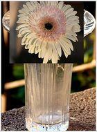 Die alte Vase...