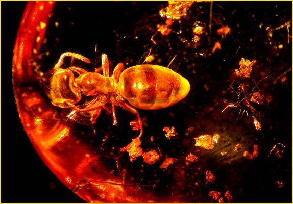 die Ameise im Bernstein gefangen