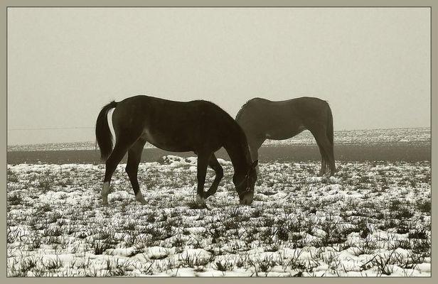 die armen pferde...