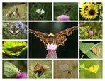 Die Artenvielfalt unserer Wiesen - Teil 3